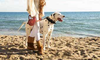 Woman with dalmatian