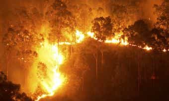Bushfire Checklist: How to prepare for a bushfire & Bushfire Survival Plan