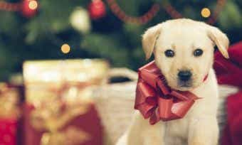 Christmas Gift ideas for your dog, cat & bird!