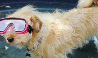 Dog in scuba gear