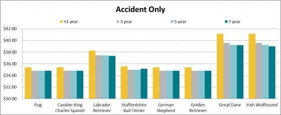 Dog insurance and price of accident only cover
