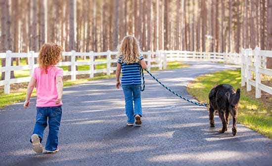 Dog-walking--and-many-fun-ways-kids-could-make-money-during-holidays