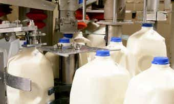 "Aussie milk production could ""almost double"""