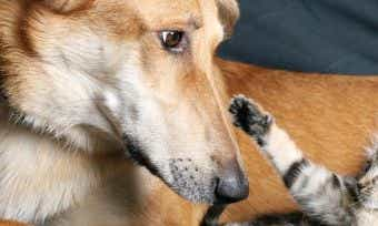 Popular dog & cat names in Australia 2016