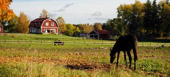 Big-animals---one-of-the-pros-of-owning-acreage