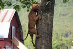 Climbing dog Ace