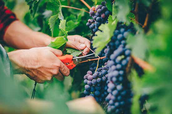 wine industry outlook