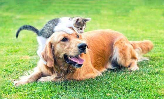 Compare 80+ Pet Insurance Policies from 20 Providers | Canstar