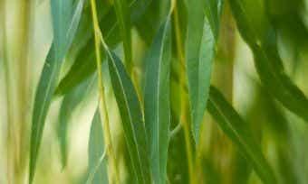 Gumtree Reveals Second-hand Economy Worth $40 Billion