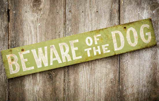 dog beware sign