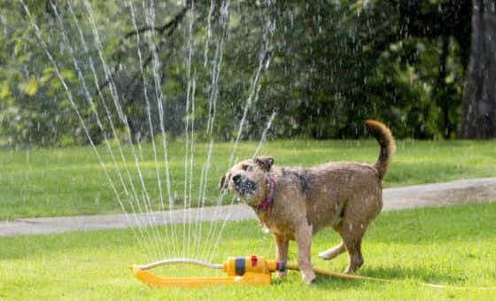 tips-for-your-pets-to-beat-the-heat