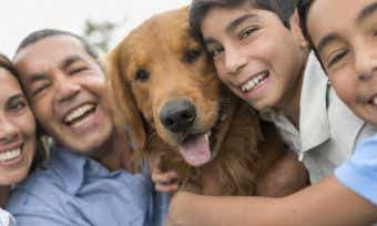 How To Renew Your Pet Insurance Policy