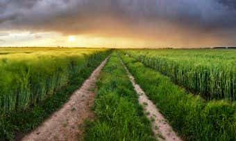 Aussie Farmers Warned Of Two Major Threats This Winter | Canstar