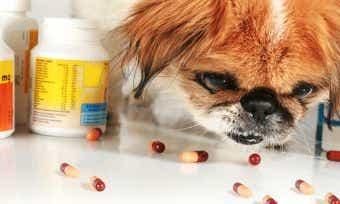 Human Drugs Poisoning Pets