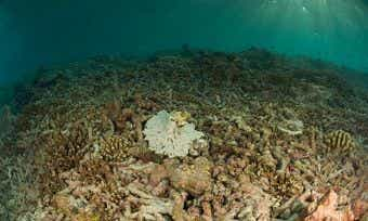 The Great Barrier Reef: Still Worth A Visit?