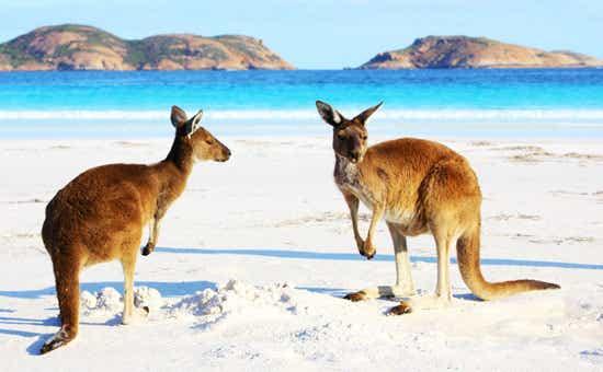 International Visitors To Australia Spend Big In 2017