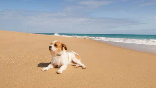 RACQ To Sell Pet Insurance In WA Through Perth-Based RAC ...