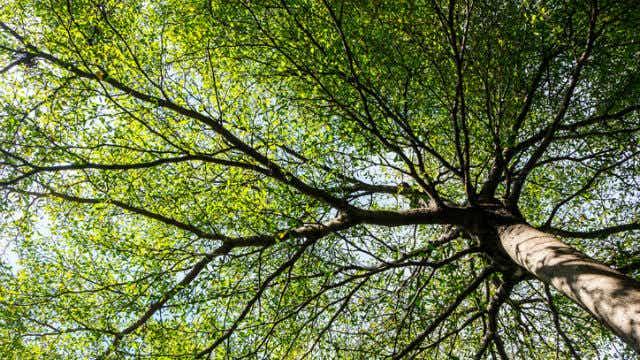 Kogan Branching Out