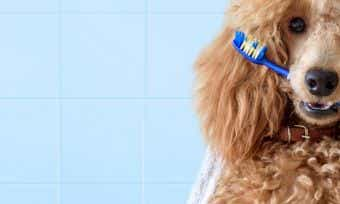 Which pet insurance covers dental treatment?