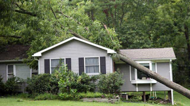 Storm damage by fallen trees insurance cover