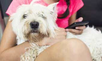 5 Pet Apps You Need On Your Phone