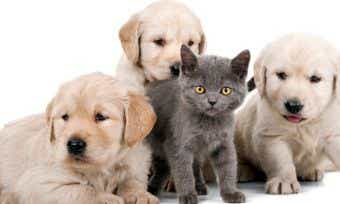 pet insurance puppies and kittens