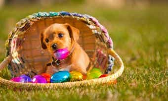 Easter and dogs
