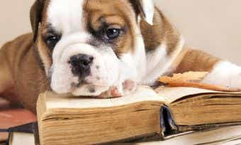 How much does puppy school cost?