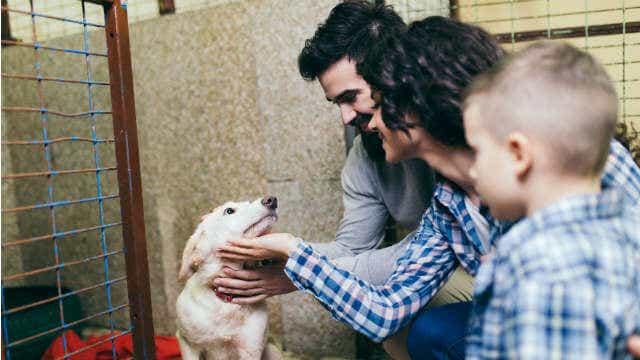 puppy cost adoption