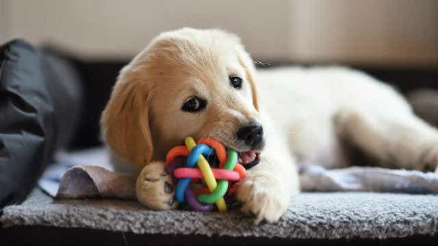 puppy cost toys