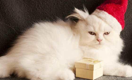 christmas present insurance