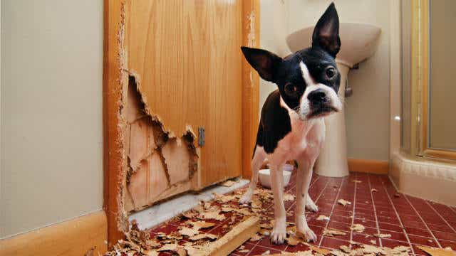 pet damage home exclusions