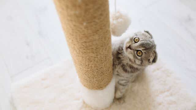 How Much Does It Cost In Total To Own A Kitten? | Canstar