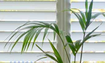 Plantation Shutters: Shedding Light On the Costs Involved