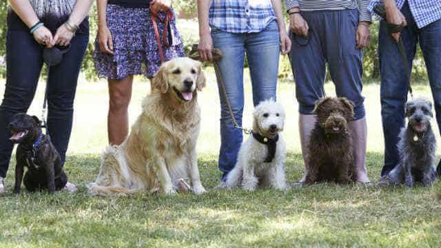 pet friendly rental obedience schooll