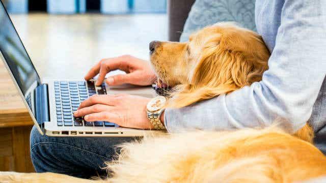 pet friendly rental pet resume