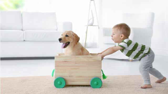 pet friendly rental pet with child