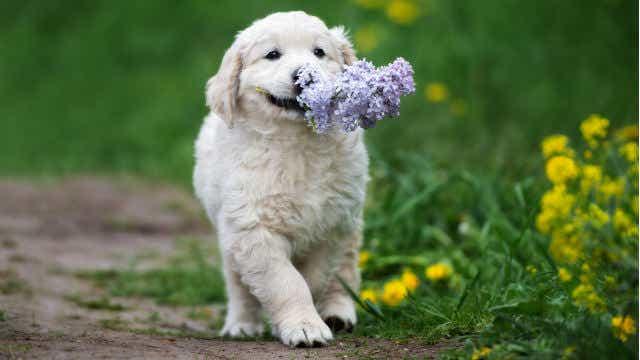 puppy proofing garden