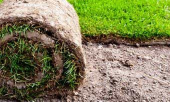 Laying down the lawn: The cost of turf explained