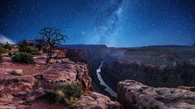 Stars shine brightly over the Grand Canyon, with a tree in the foreground