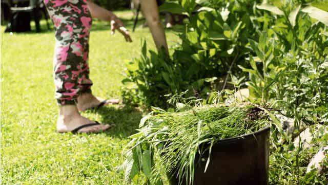 pulling weeds garden